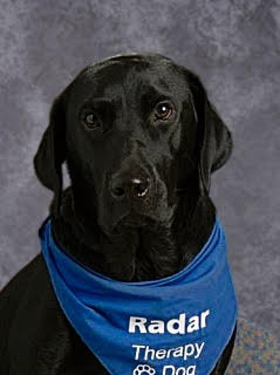 Radar, the school therapy dog